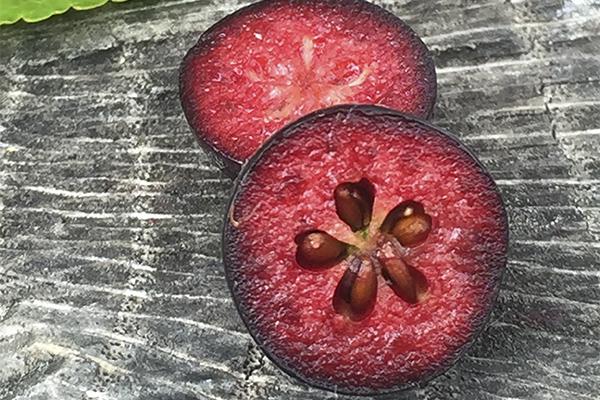 Aroniabeere Fruchtfleisch