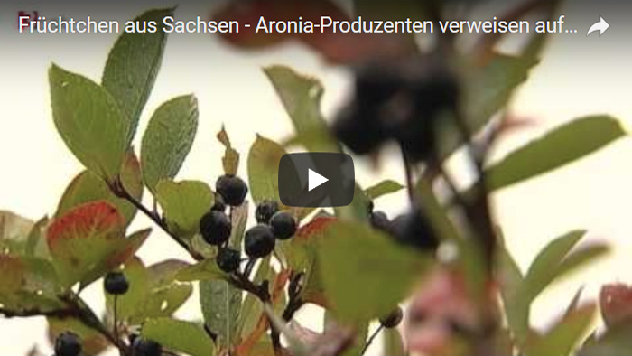 Aronia Video Screenshot 1