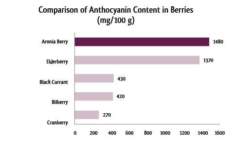 Diagramm-Anthocyanin-englisch