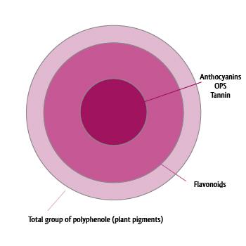 Diagramm-Plantpigments-englisch